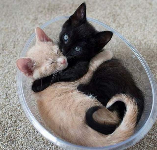 Hình ảnh những chú mèo đáng yêu