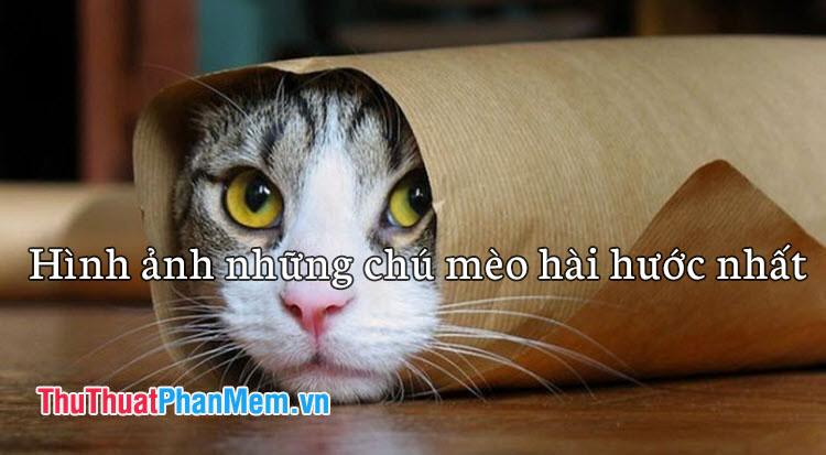 Những hình ảnh chú mèo hài hước nhất