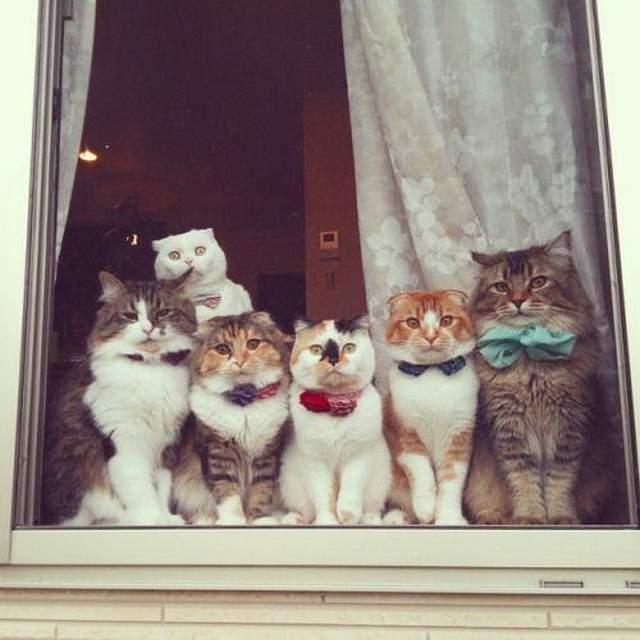 Hình ảnh những chú mèo hài hước