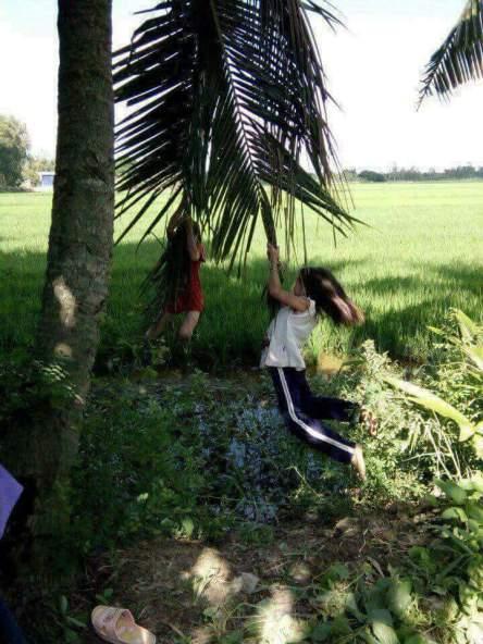 Hình ảnh trò chơi đu lá dừa tuổi thơ