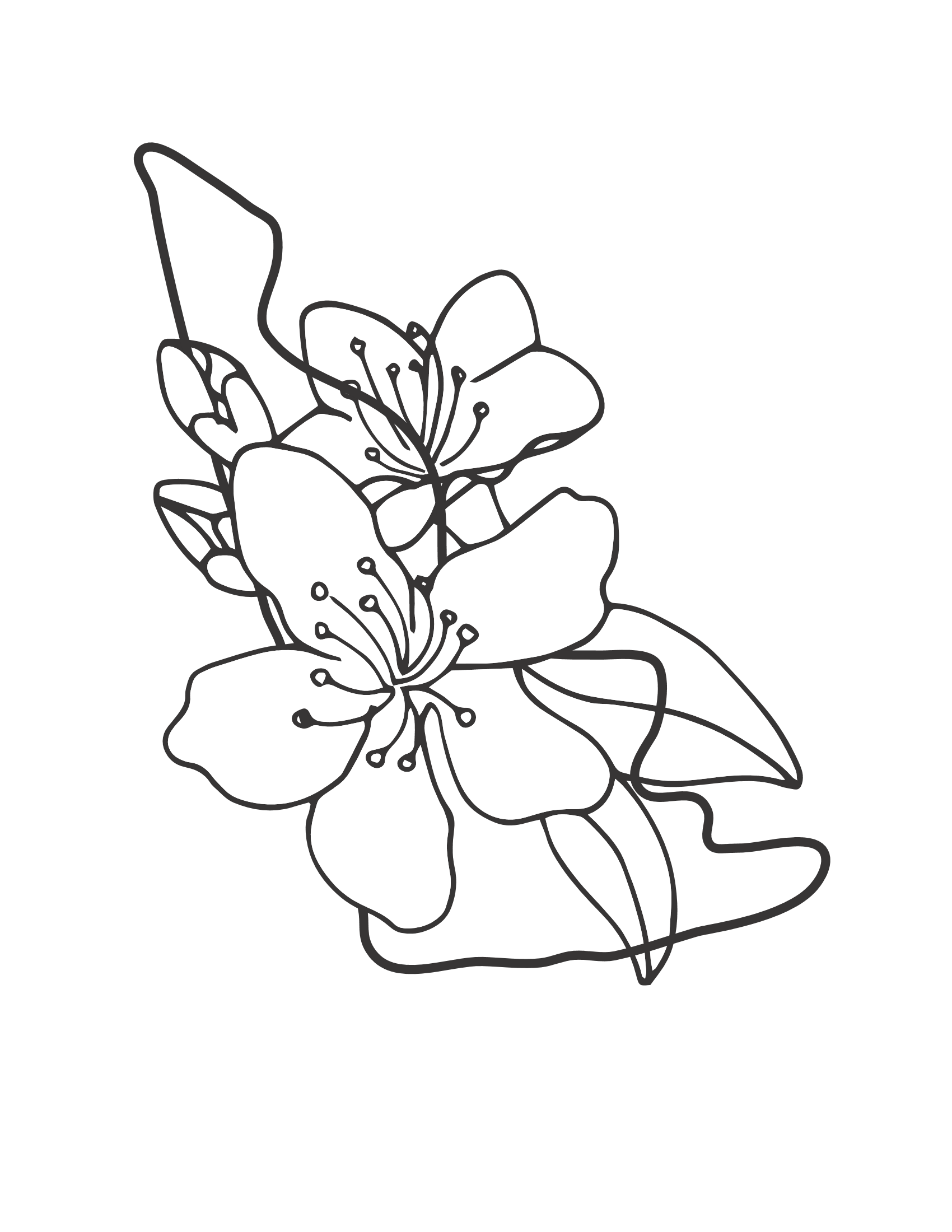 Hình ảnh tranh tô màu hoa mai đẹp nhất cho bé tập tô