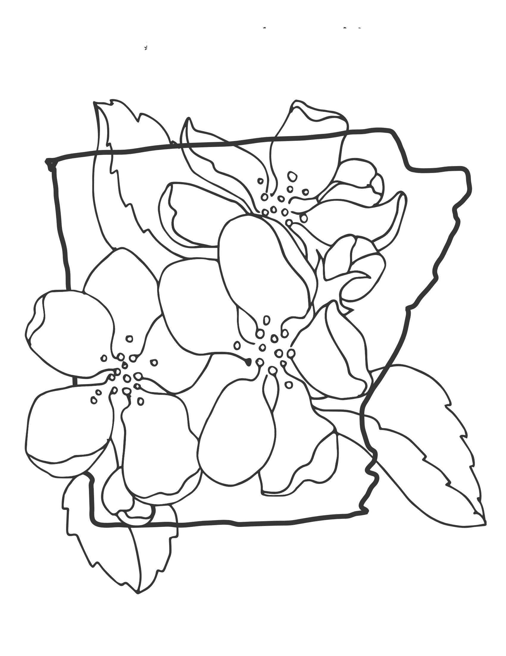 Tô màu tranh hình hoa mai cho bé tập tô