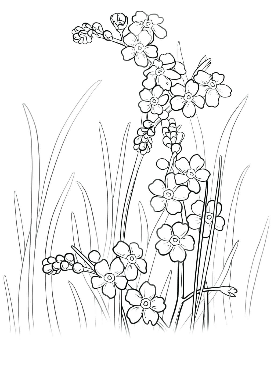 Tô màu tranh hình hoa mai