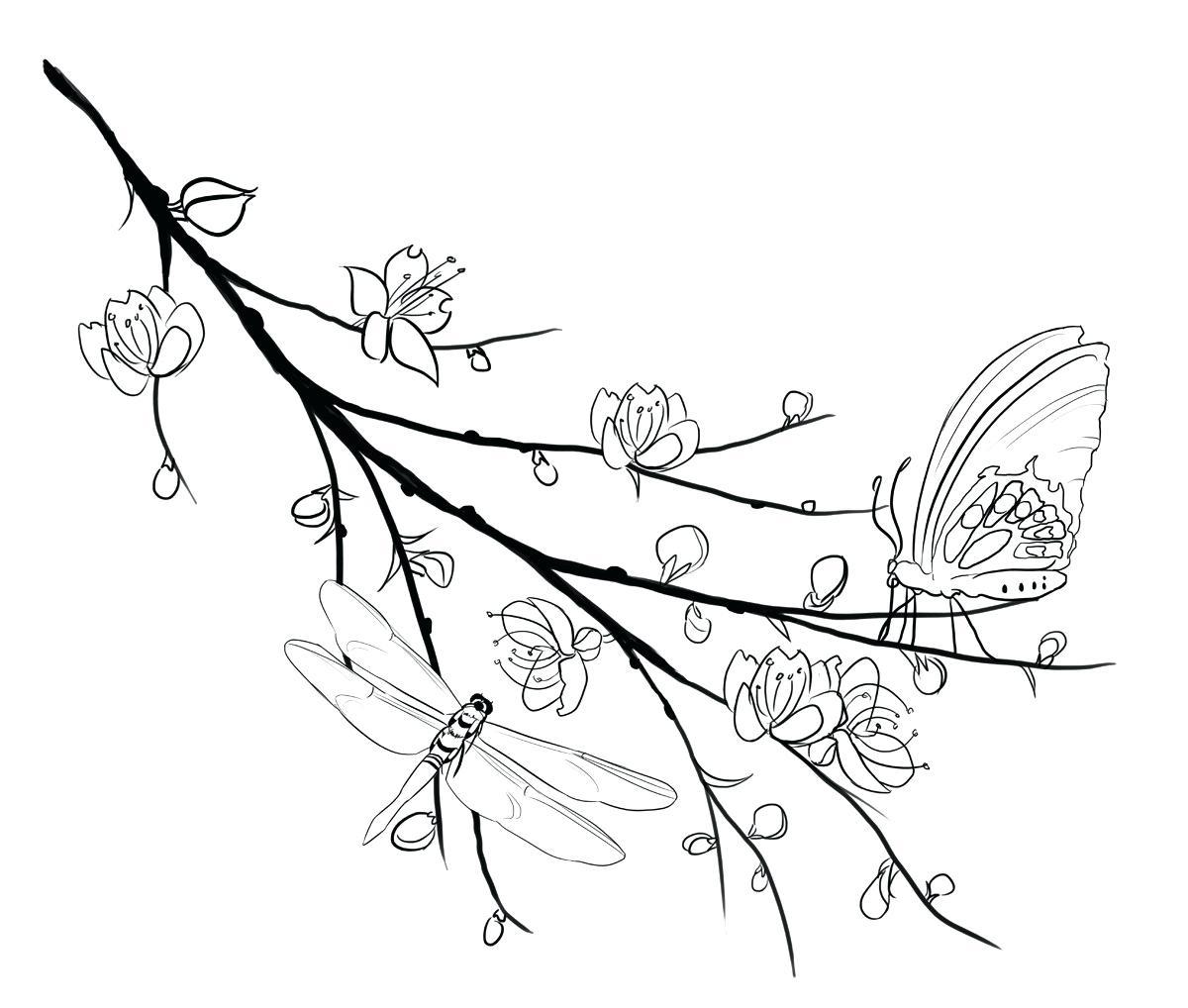 Tranh tô màu bông hoa mai đẹp nhất