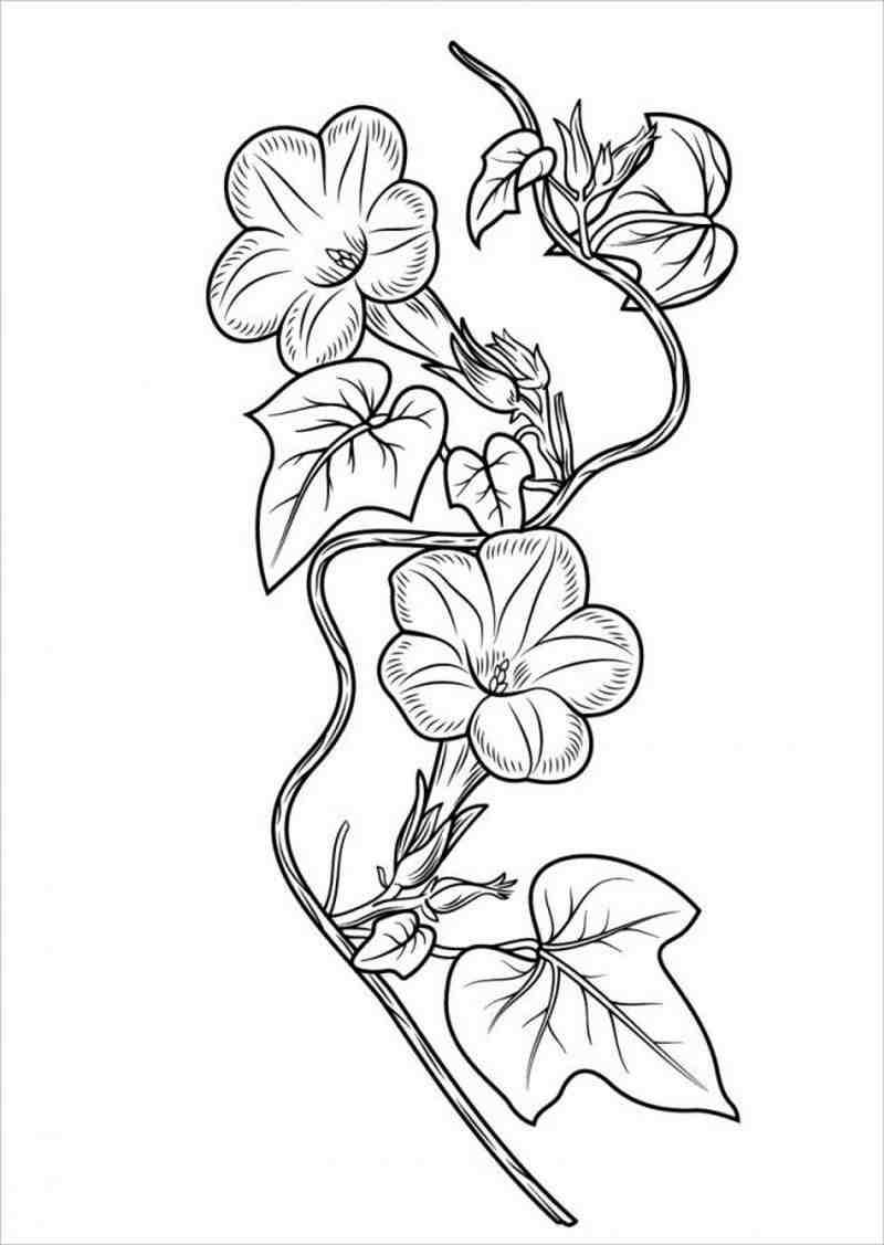 Tranh tô màu hình bông hoa mai đẹp nhất