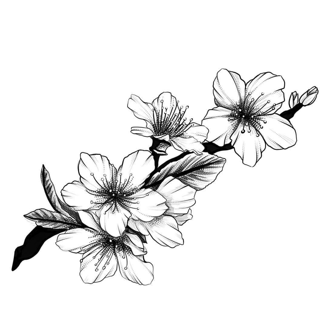 Tranh tô màu hình hoa mai đẹp