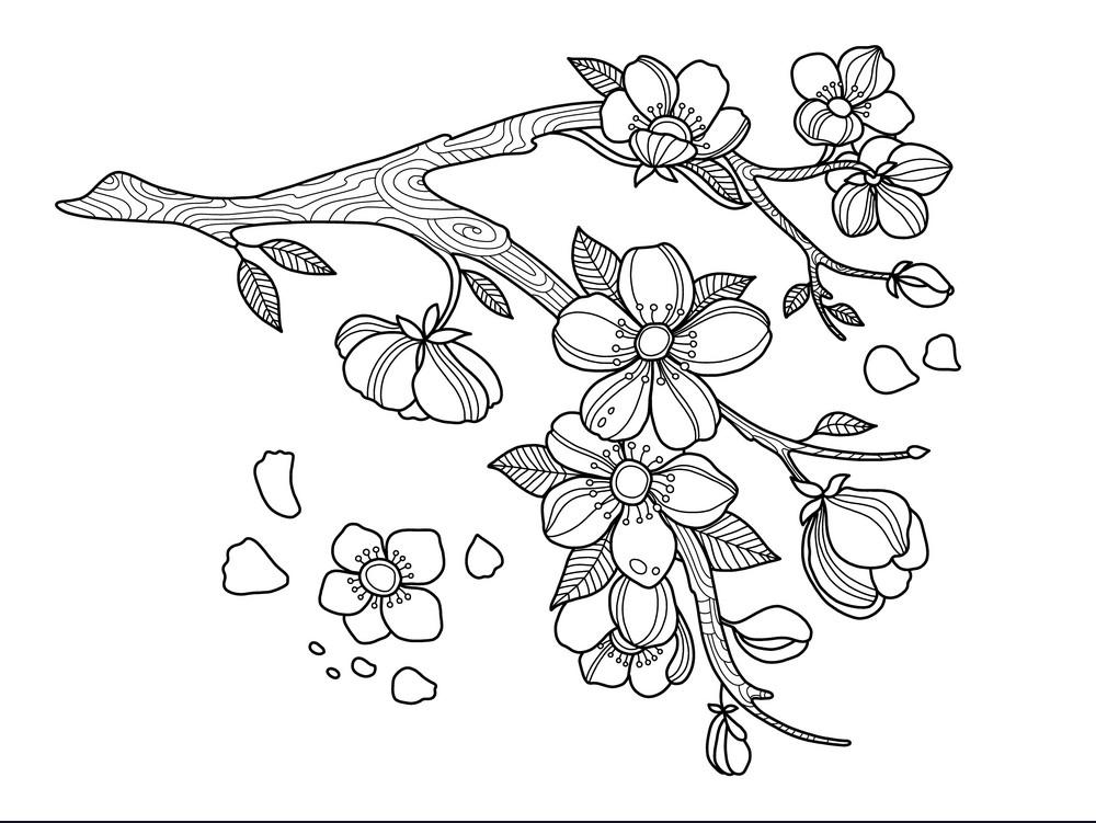 Tranh tô màu hình hoa mai hoa đào đẹp nhất