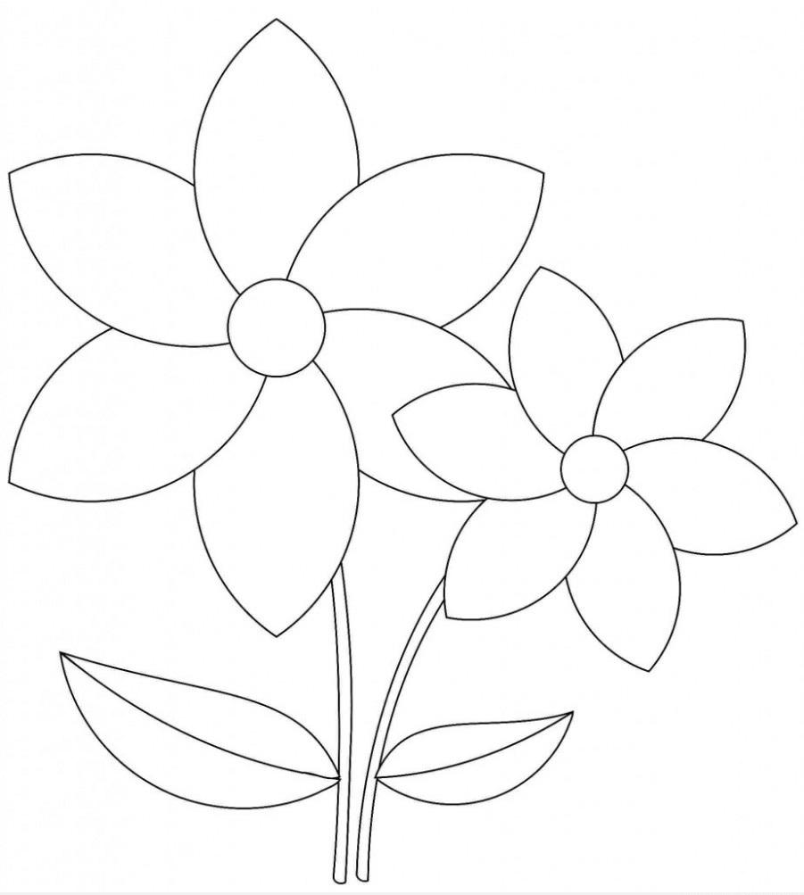 Tranh tô màu hoa mai