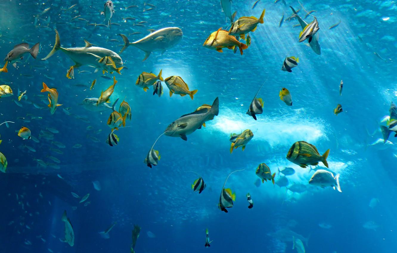 Hình ảnh cá bơi dưới nước