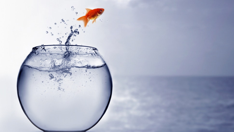 Hình ảnh cá nhảy khỏi nước