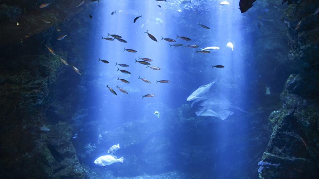 Hình ảnh con vật sống dưới nước