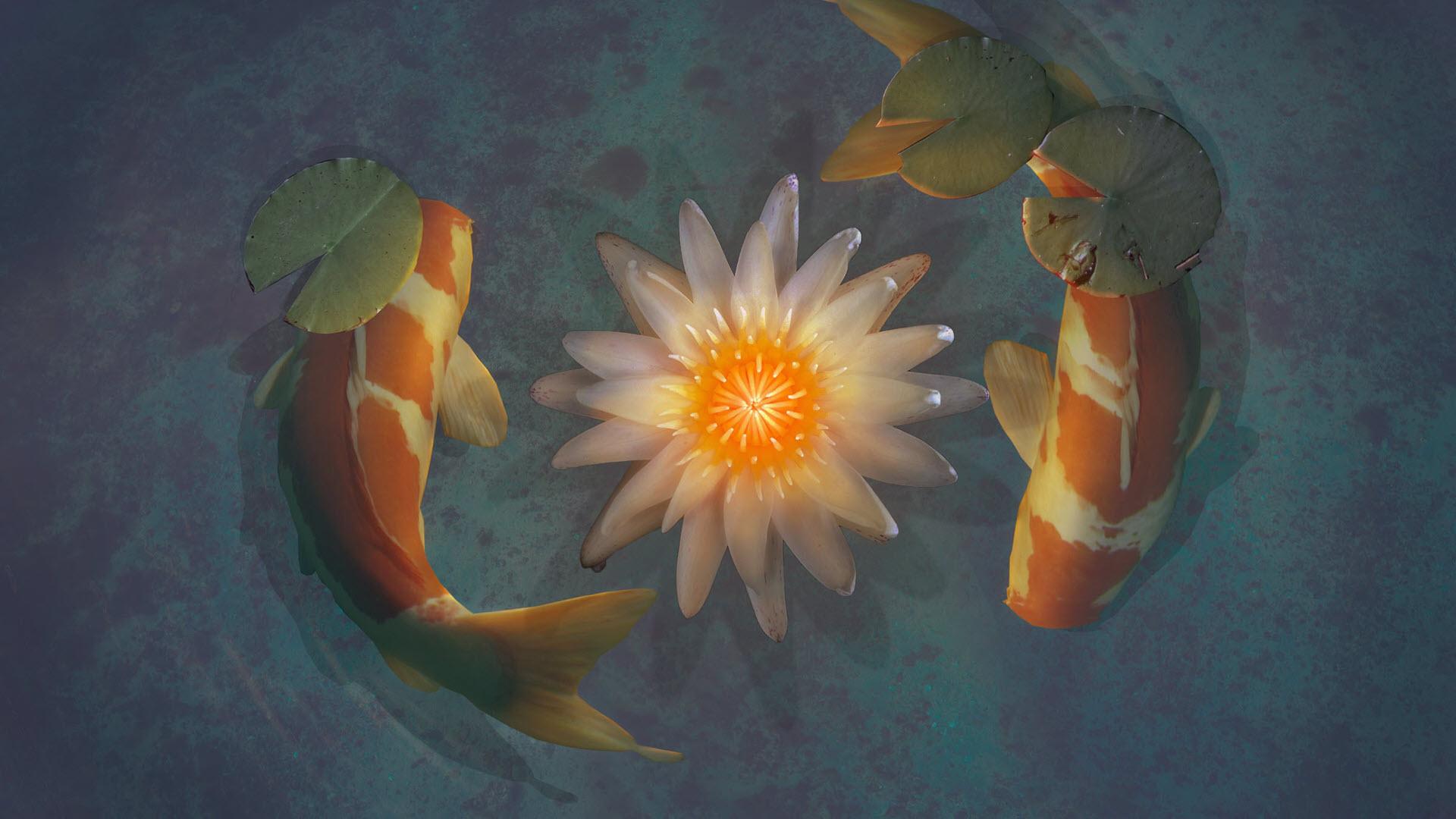 Hình nền cá koi đem lại may mắn