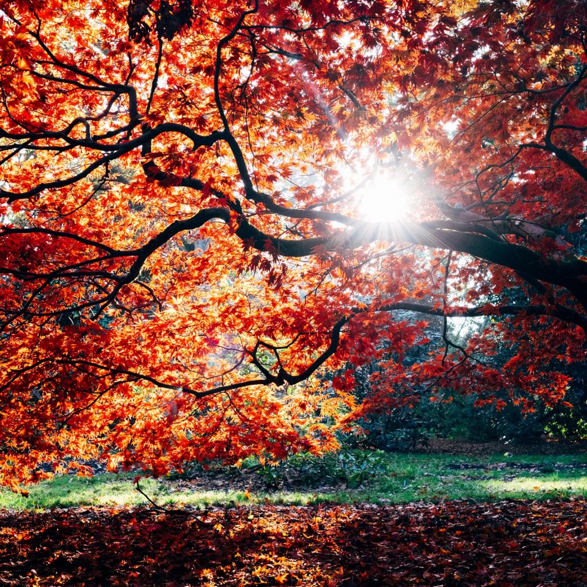 Ảnh mùa thu cây lá ngả vàng rất đẹp