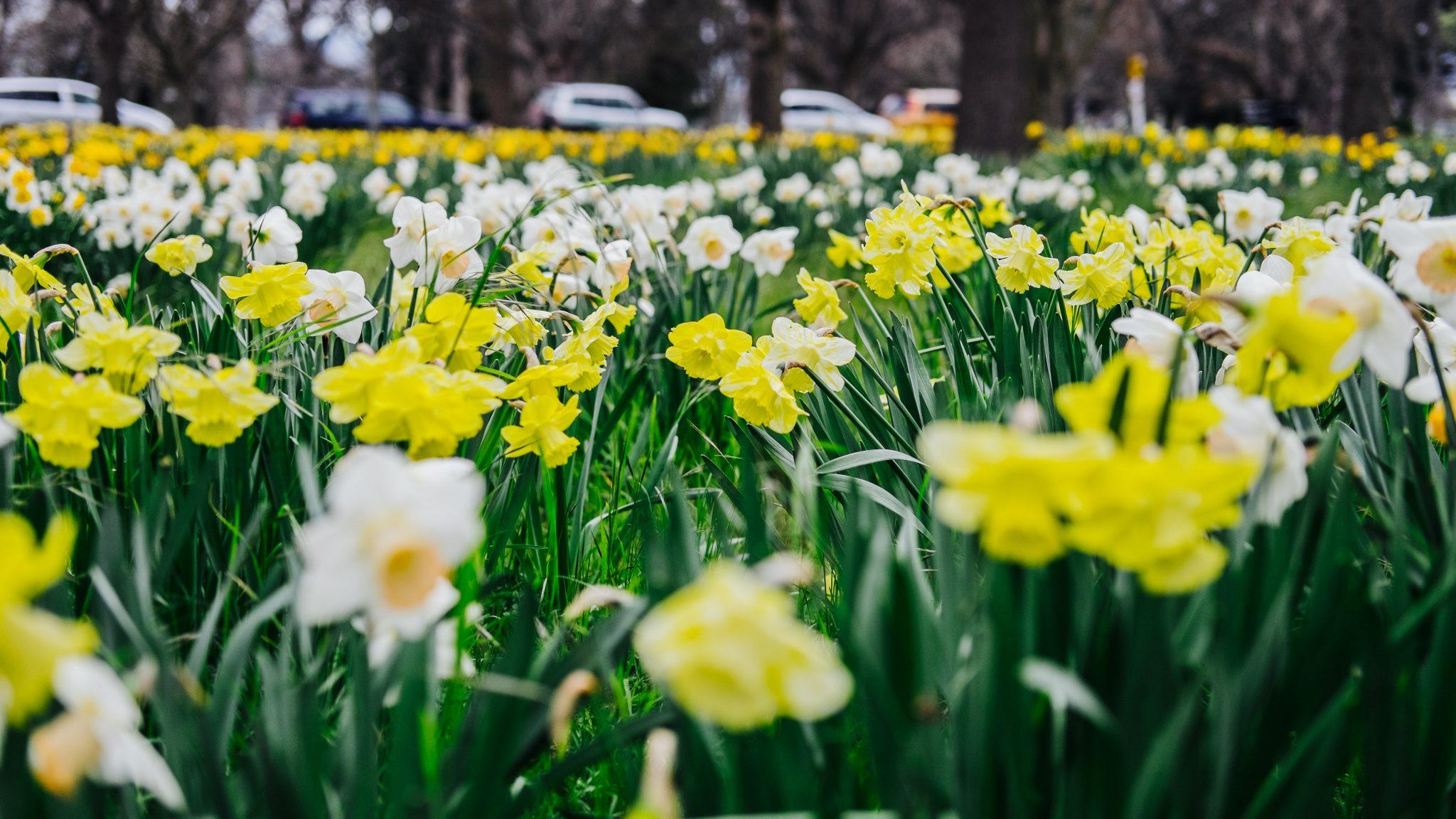 Cả vườn hoa nở vào mùa xuân