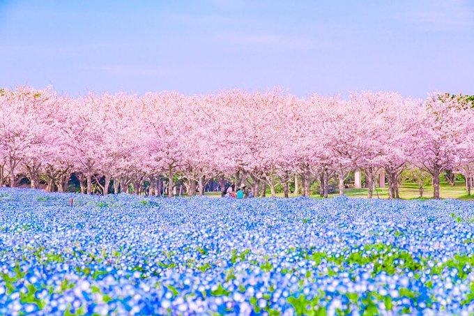 Cảnh xuân tươi đẹp nở đầy hoa]