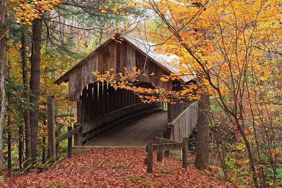 Cầu trong rừng vào mùa thu lá rụng rất đẹp