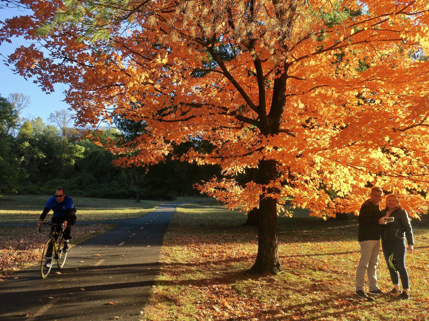 Cây lá vàng mùa thu rất đẹp