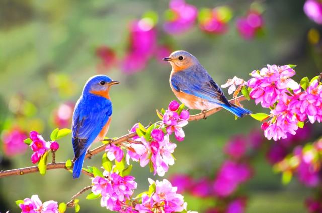 Chim đậu cành hoa vào mùa xuân