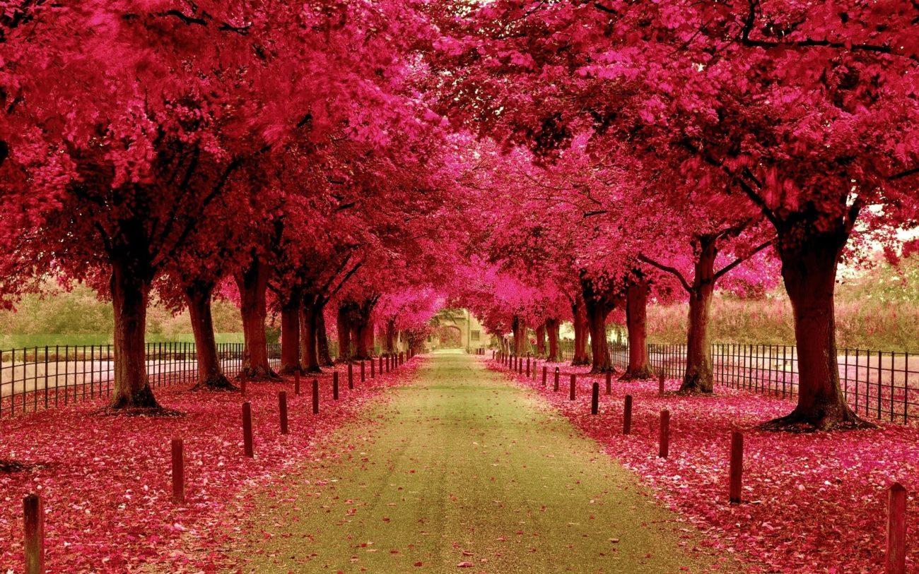 Con đường lá đỏ rơi đầy vào mùa thu