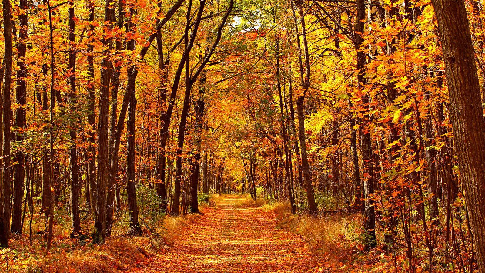 Con đường mùa thu lá vàng phủ đầy