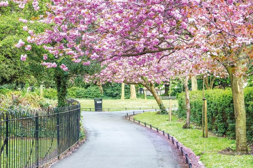 Con đường mùa xuân hoa nở đẹp