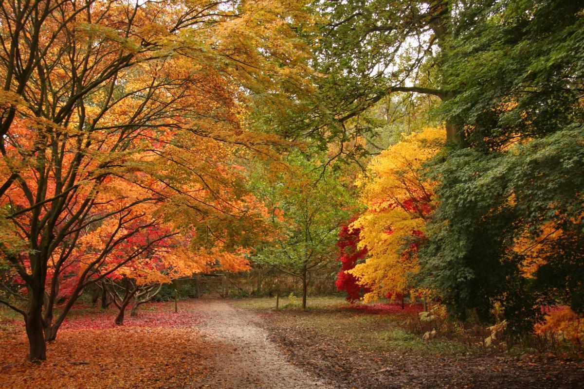 Con đường rừng cây mùa thu ngả vàng