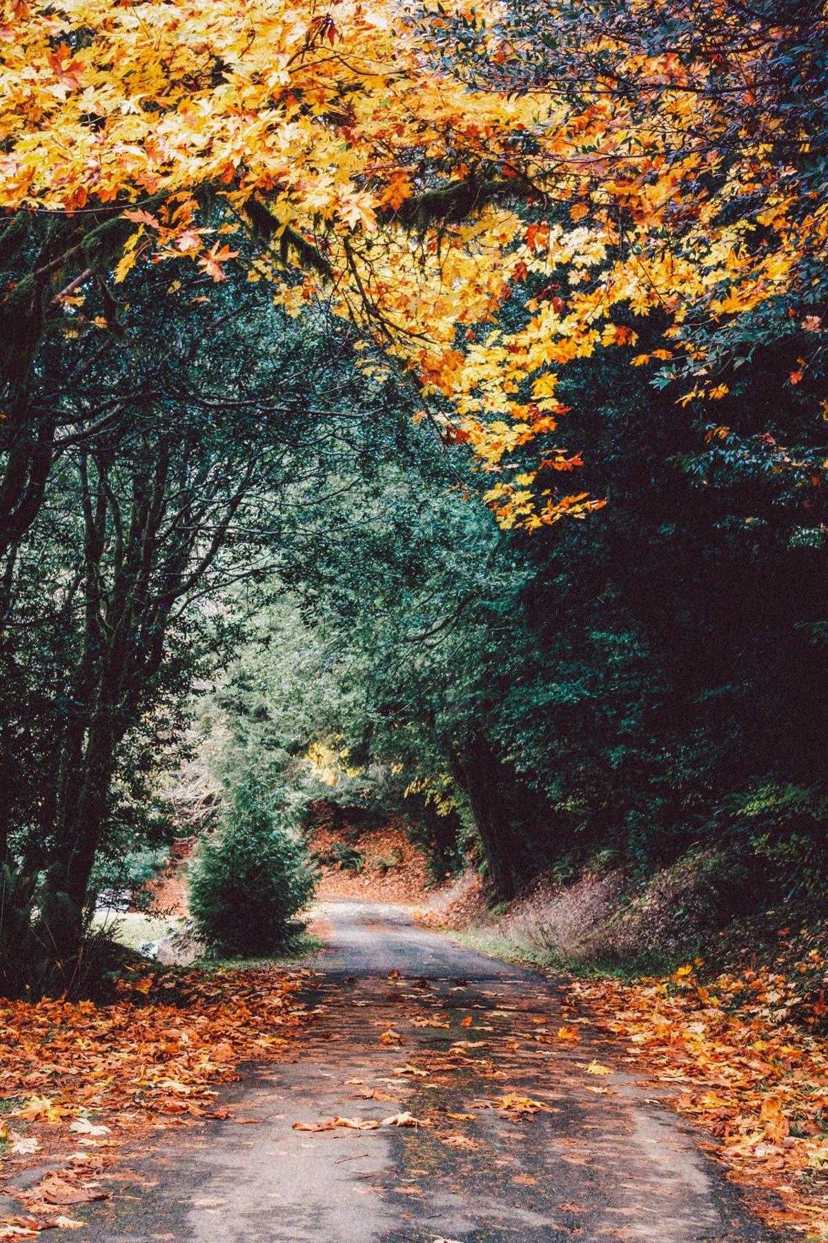 Con đường vòm lá hút mắt vào mùa thu