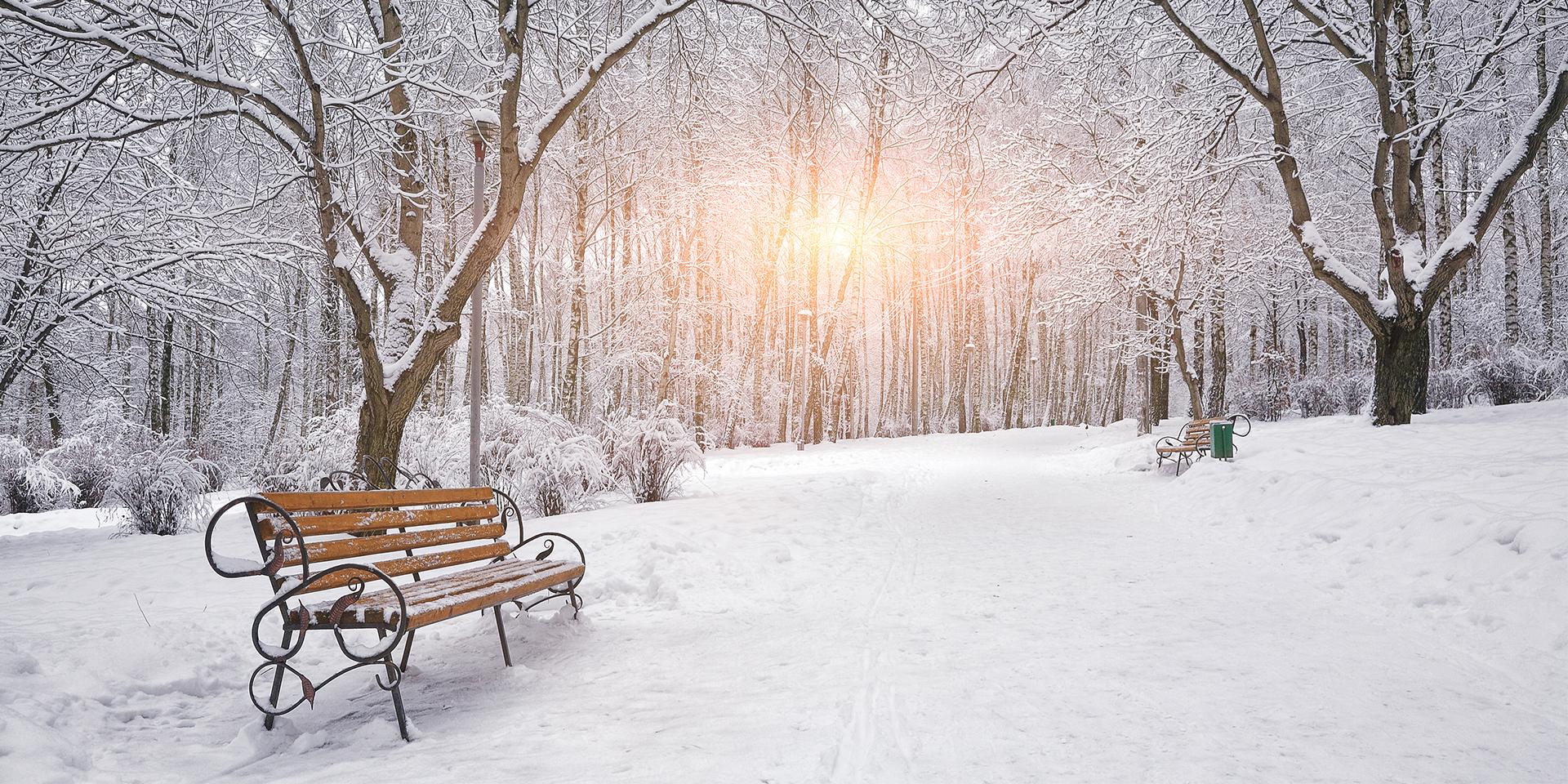 Công viên trắng tuyết vào mùa đông lạnh lẽo