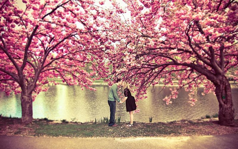 Cùng người yêu đi chơi xuân ngắm hoa anh đào