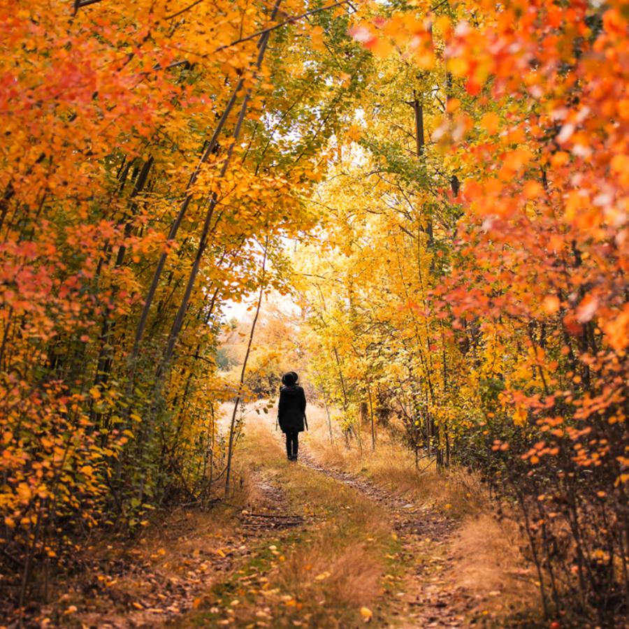 Dọc theo con đường lá trải mùa thu