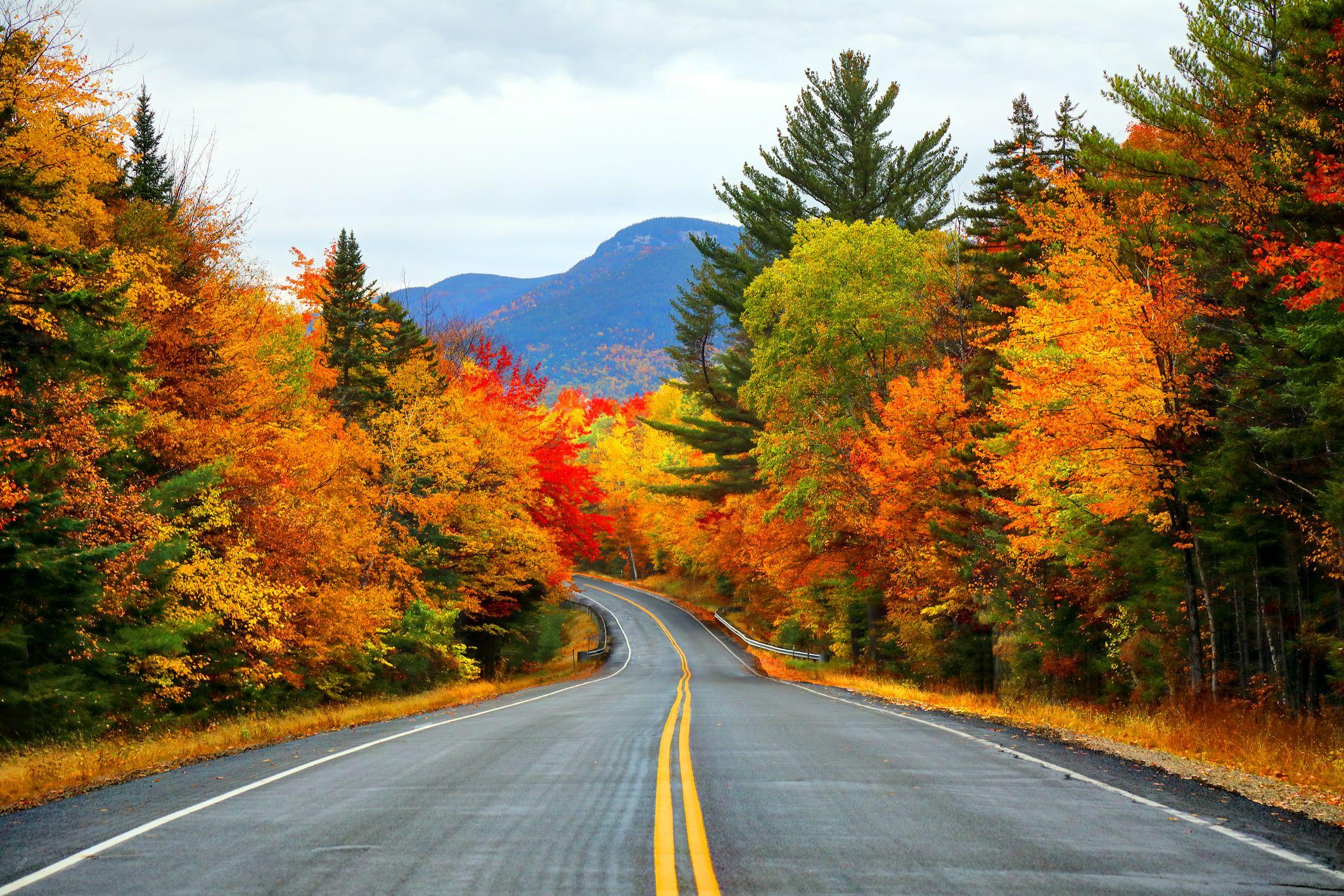 Đường quốc lộ xuyên qua cánh rừng phong vào mùa thu