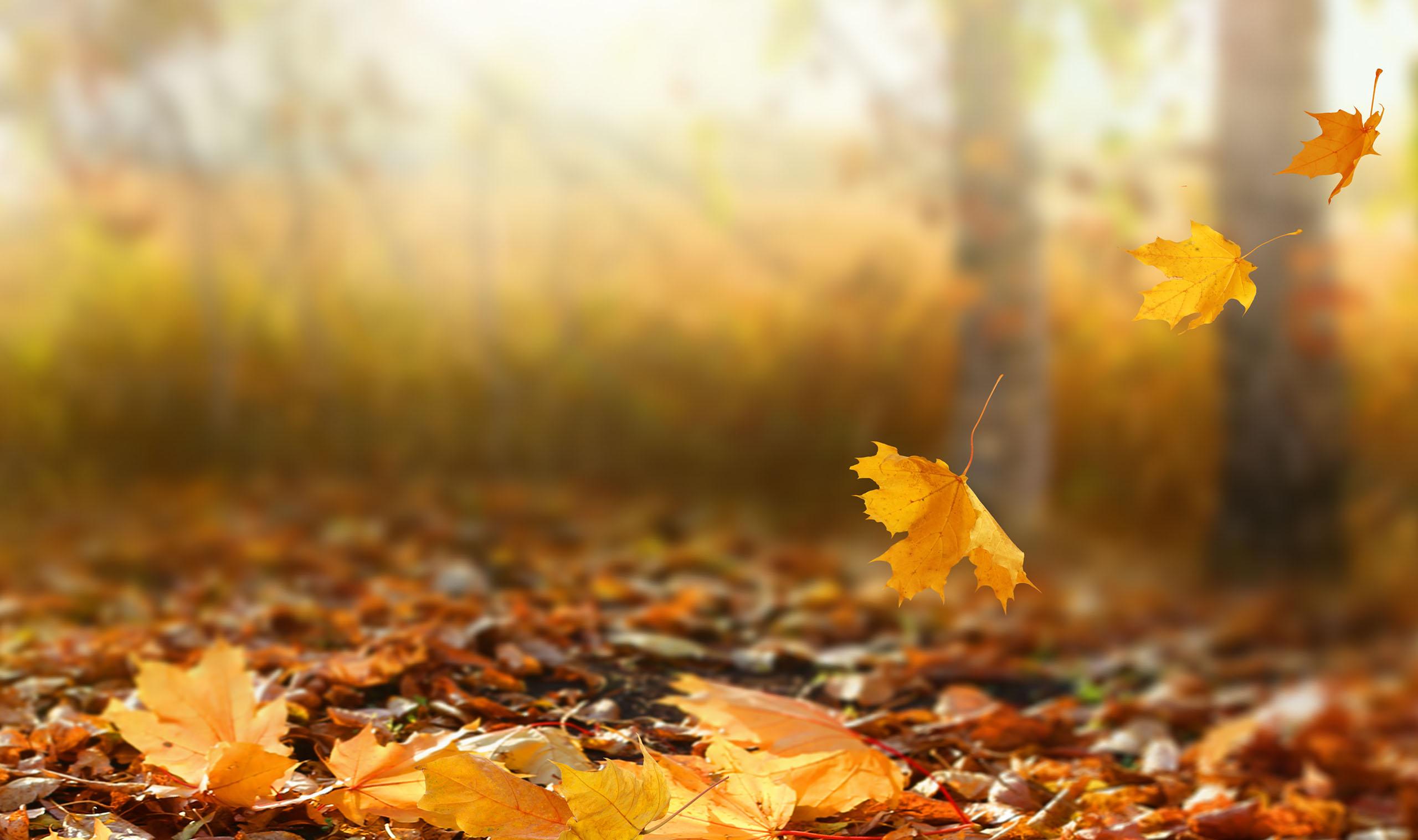 Hình ảnh lá mùa thu cực đẹp