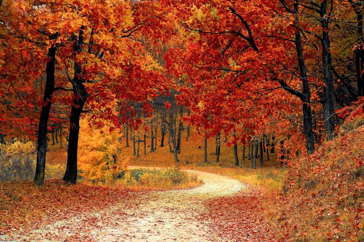 Hình ảnh mùa thu con đường lá trải
