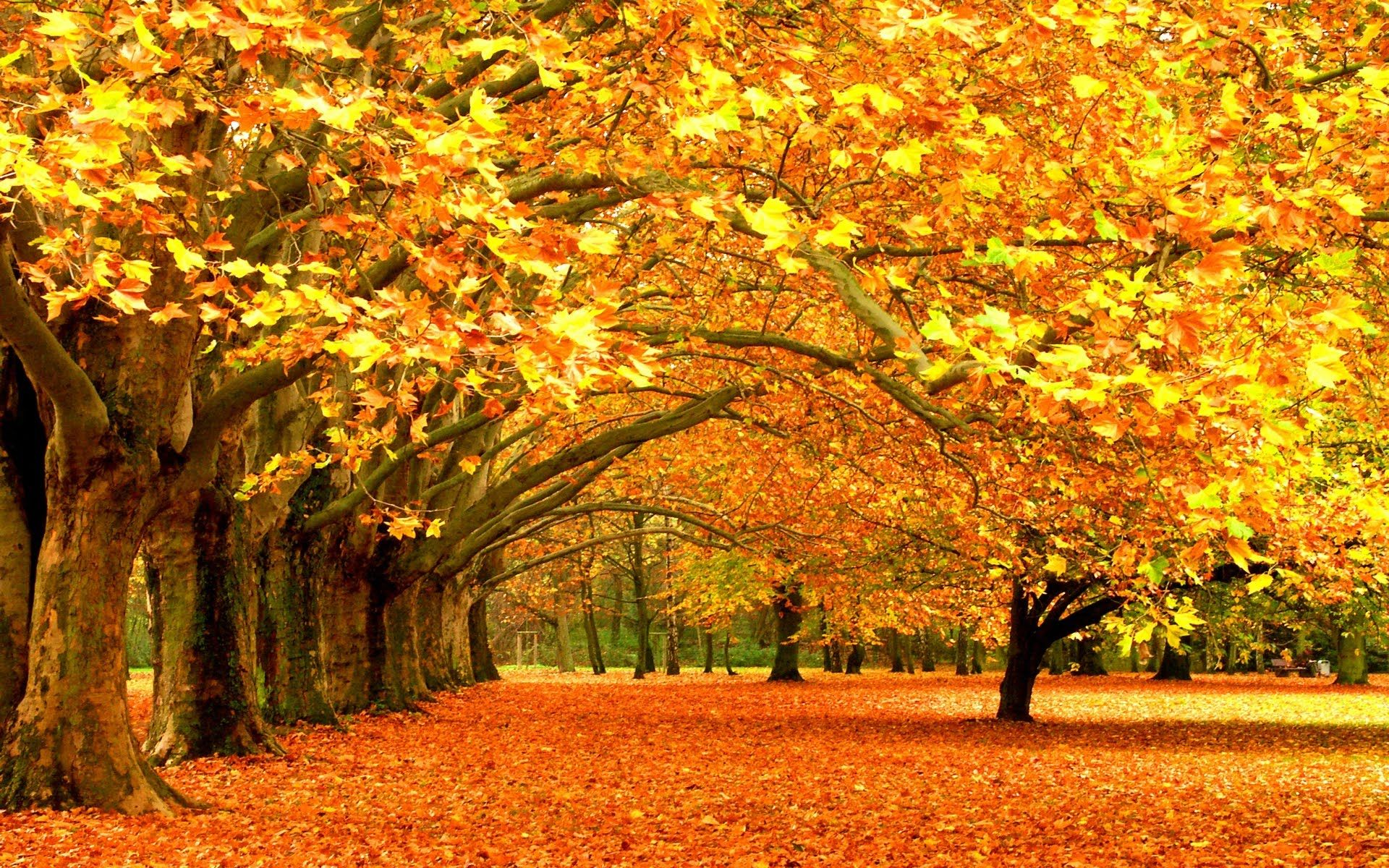 Hình ảnh mùa thu lá rụng đầy khắp chốn