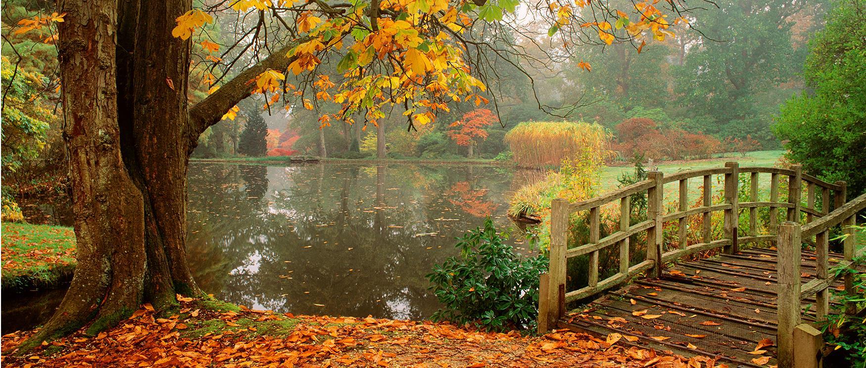 Hình ảnh mùa thu lá rụng đẹp
