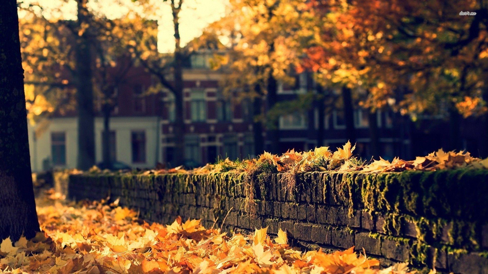 Hình ảnh mùa thu lá vàng buông