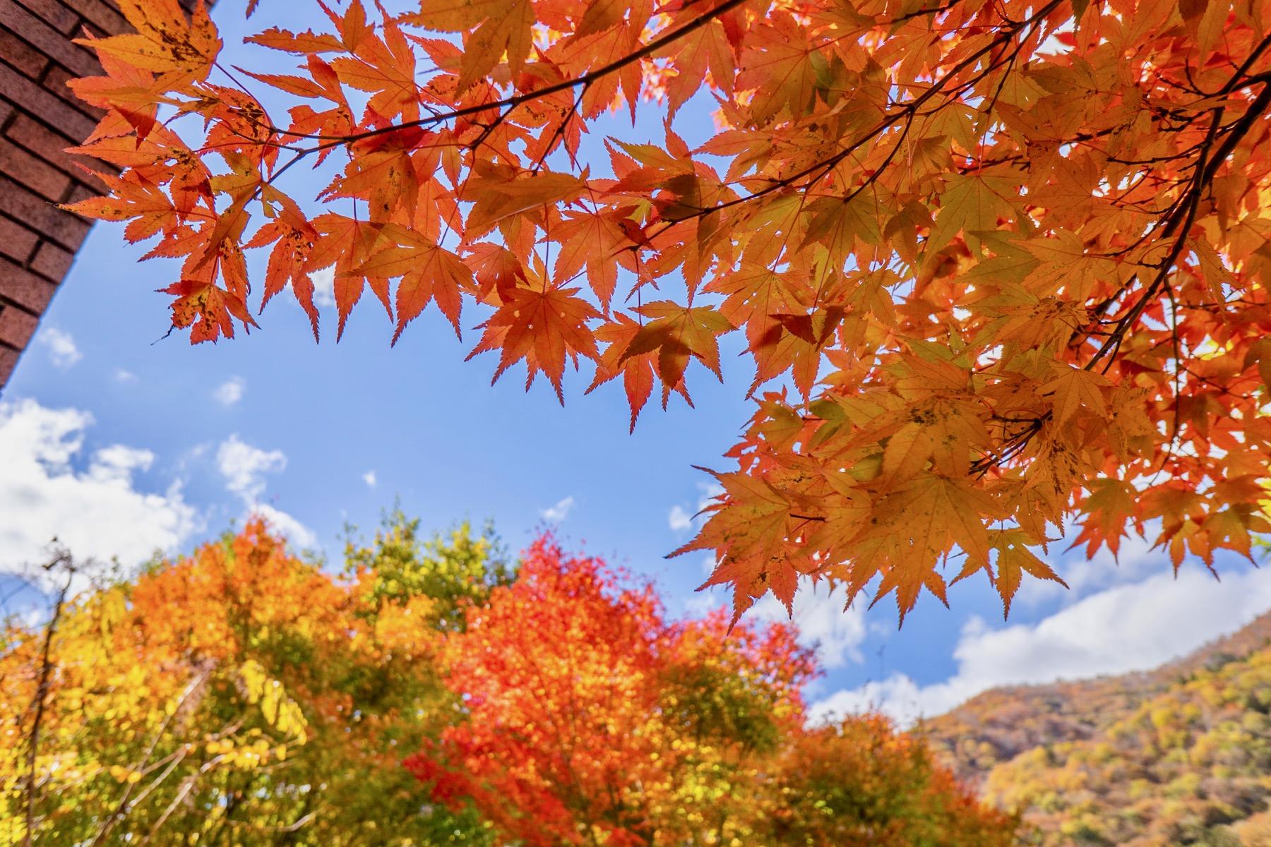Hình ảnh mùa thu lá vàng đẹp