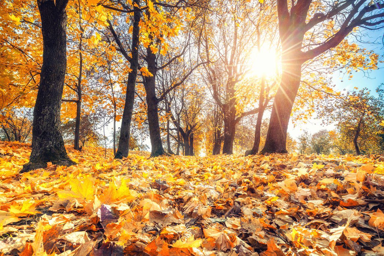 Hình ảnh mùa thu lá vàng rụng đầy sân