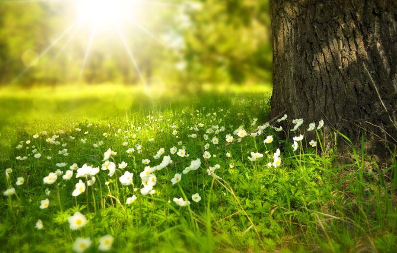 Hoa cỏ may mùa xuân