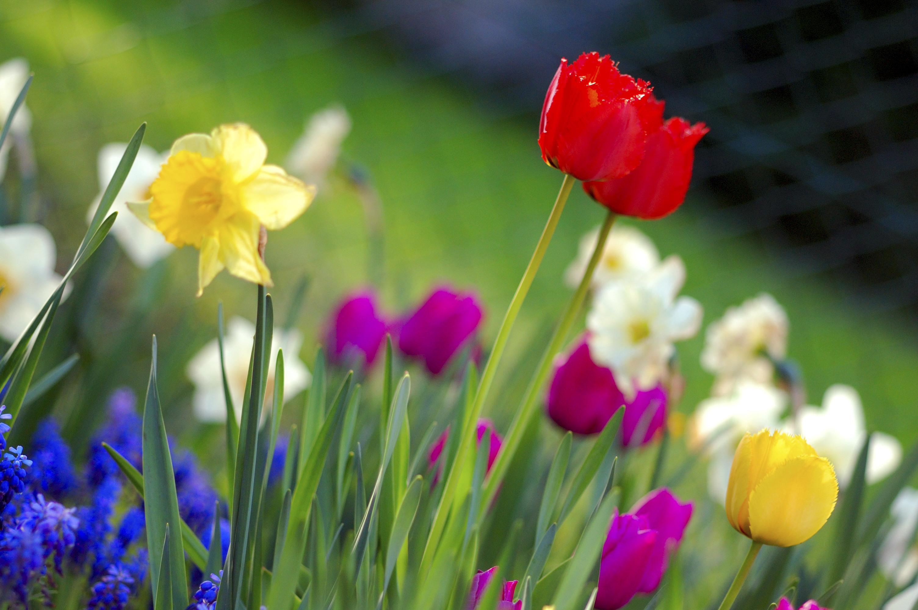 Hỏa đỏ vàng tím nở vào mùa xuân
