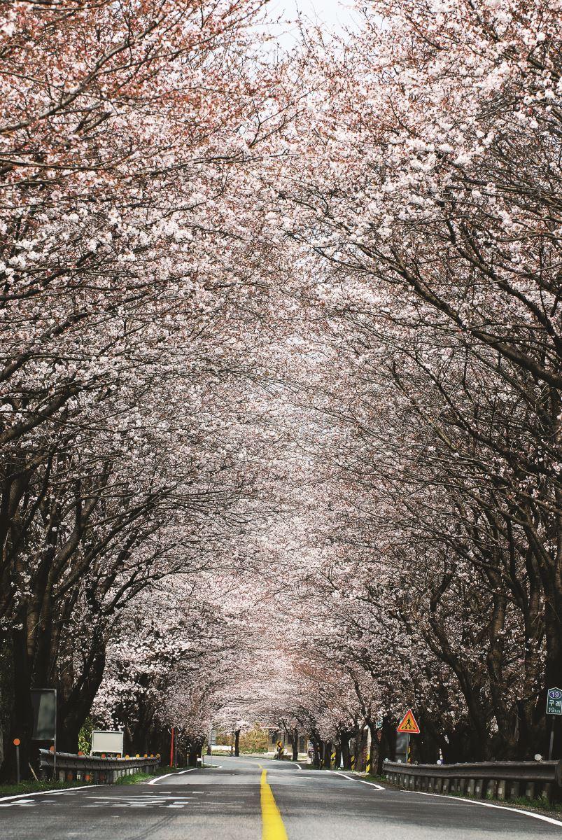 Hoa nở đẹp hút tầm mắt trên con đường vào mùa xuân