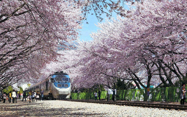 Hoa nở rộ vào mùa xuân trên đường ray tàu hỏa
