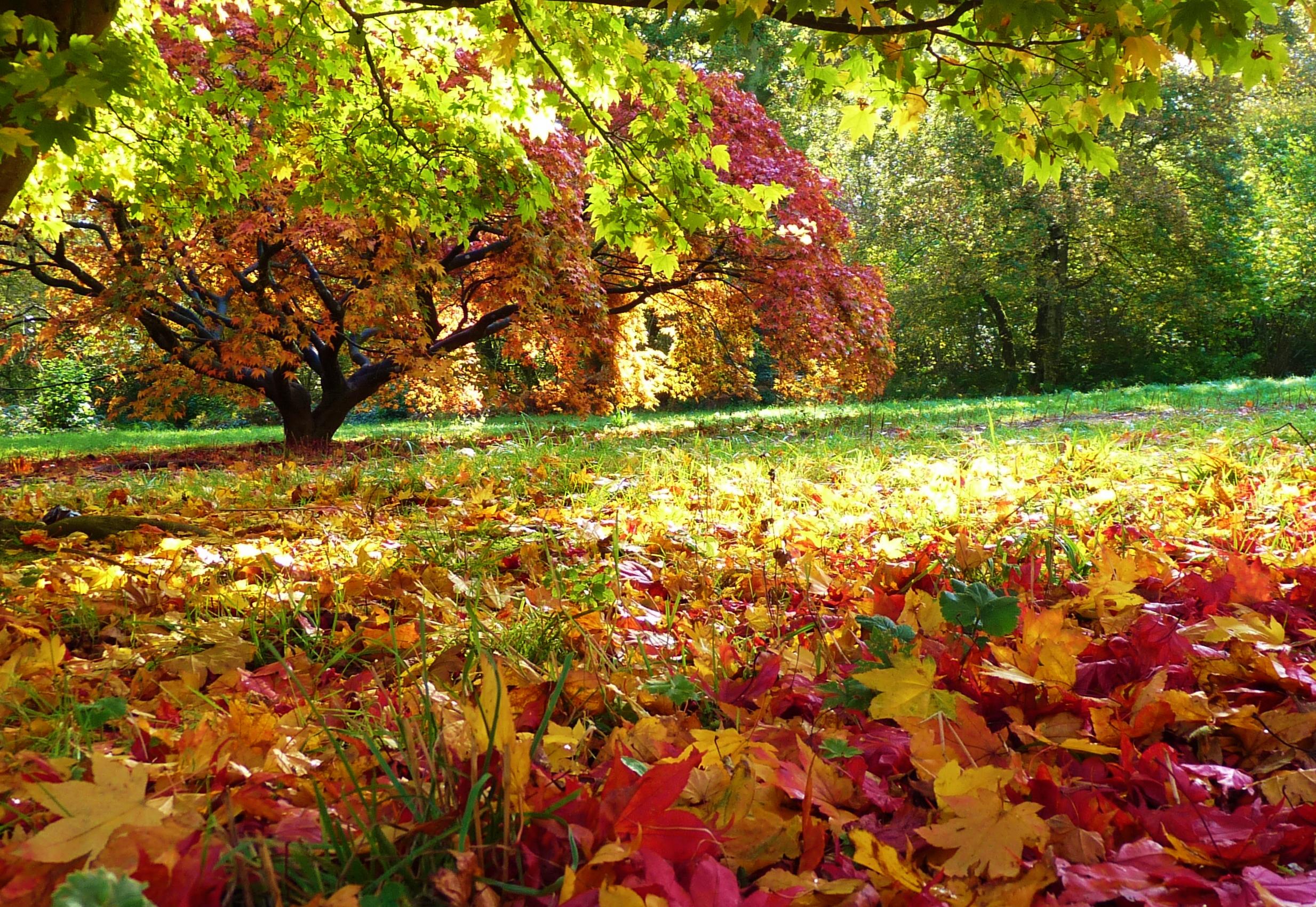 Lá đỏ rơi mùa thu cực kỳ đẹp