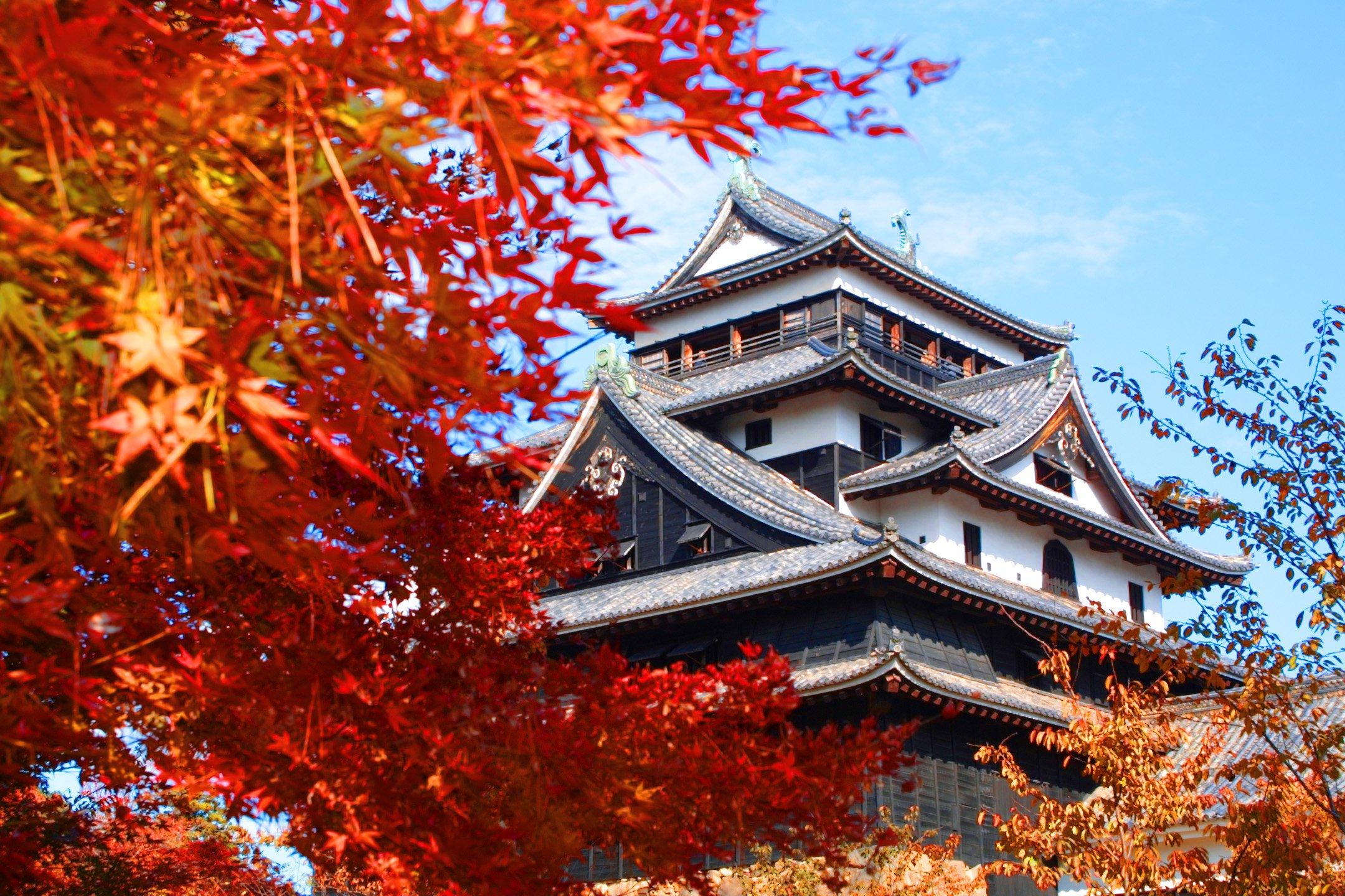 Lâu đài cổ kính bên lá mùa thu vàng