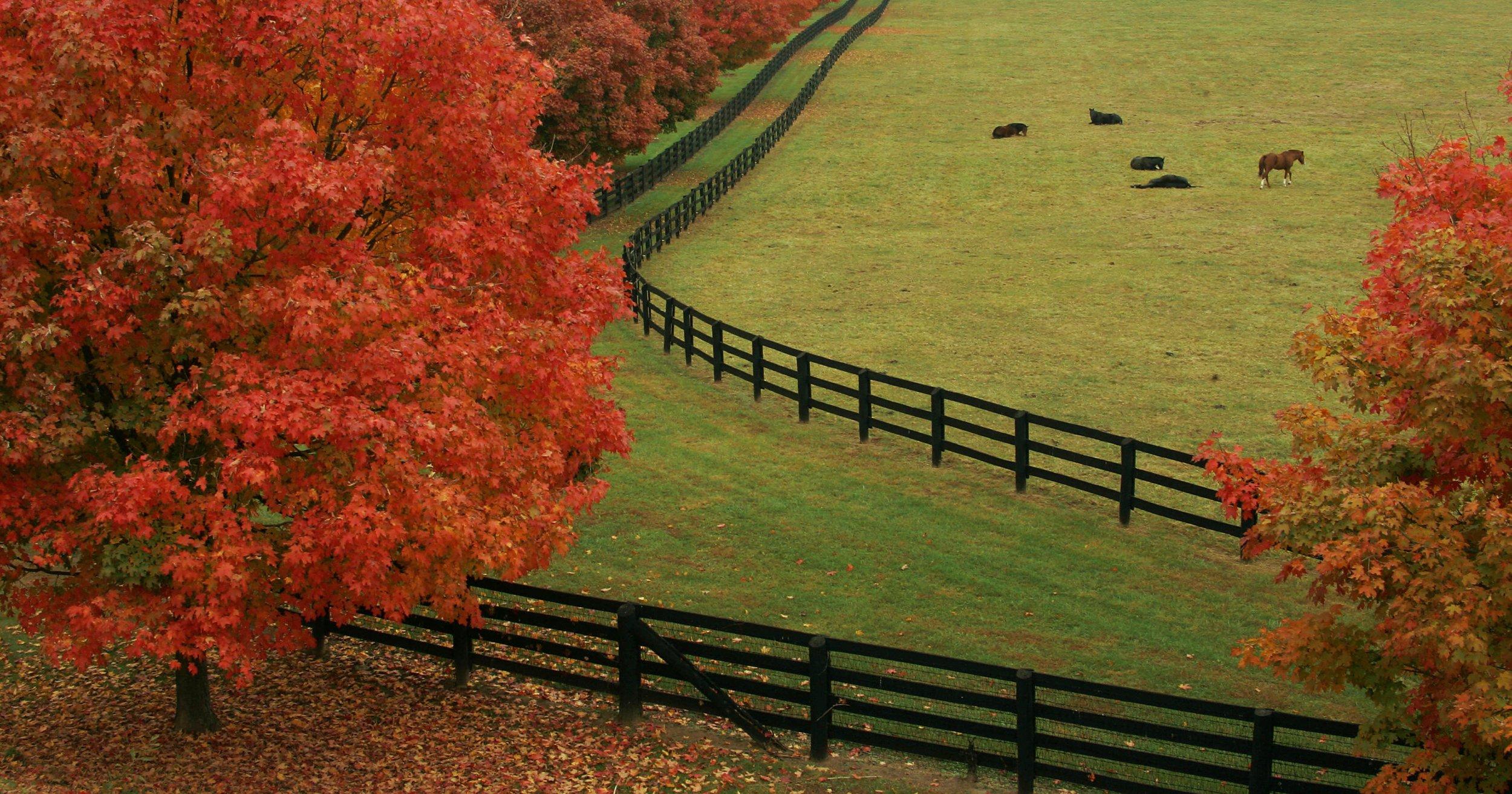 Mã trường vào mùa thu lá đỏ