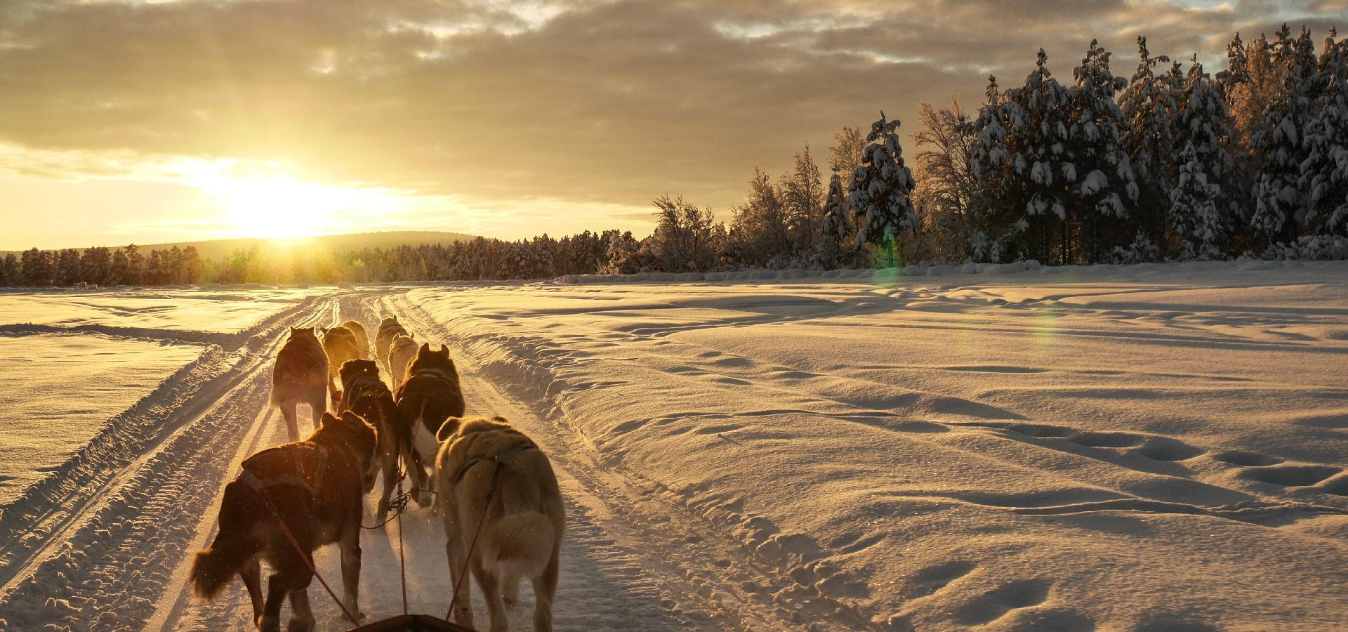 Mùa đông dùng chó kéo xe