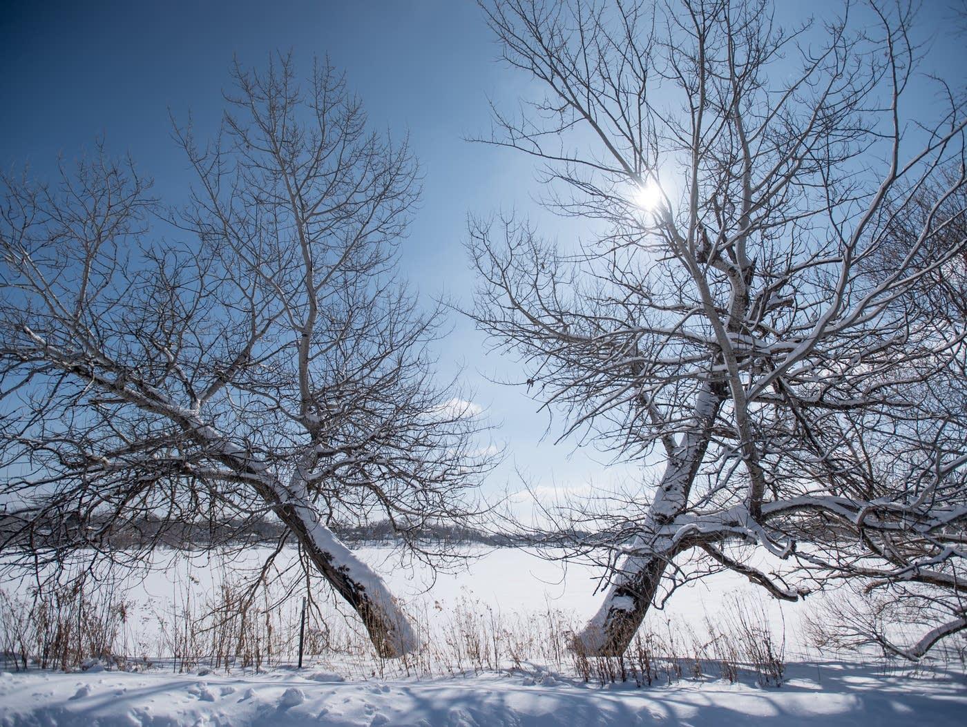 Mùa đông tuyết phủ cành lá trơ trọi
