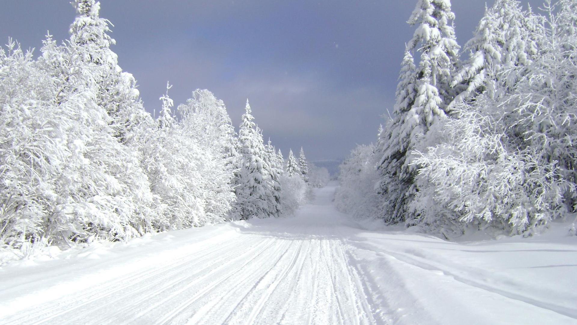 Mùa đông tuyết phủ trắng xóa