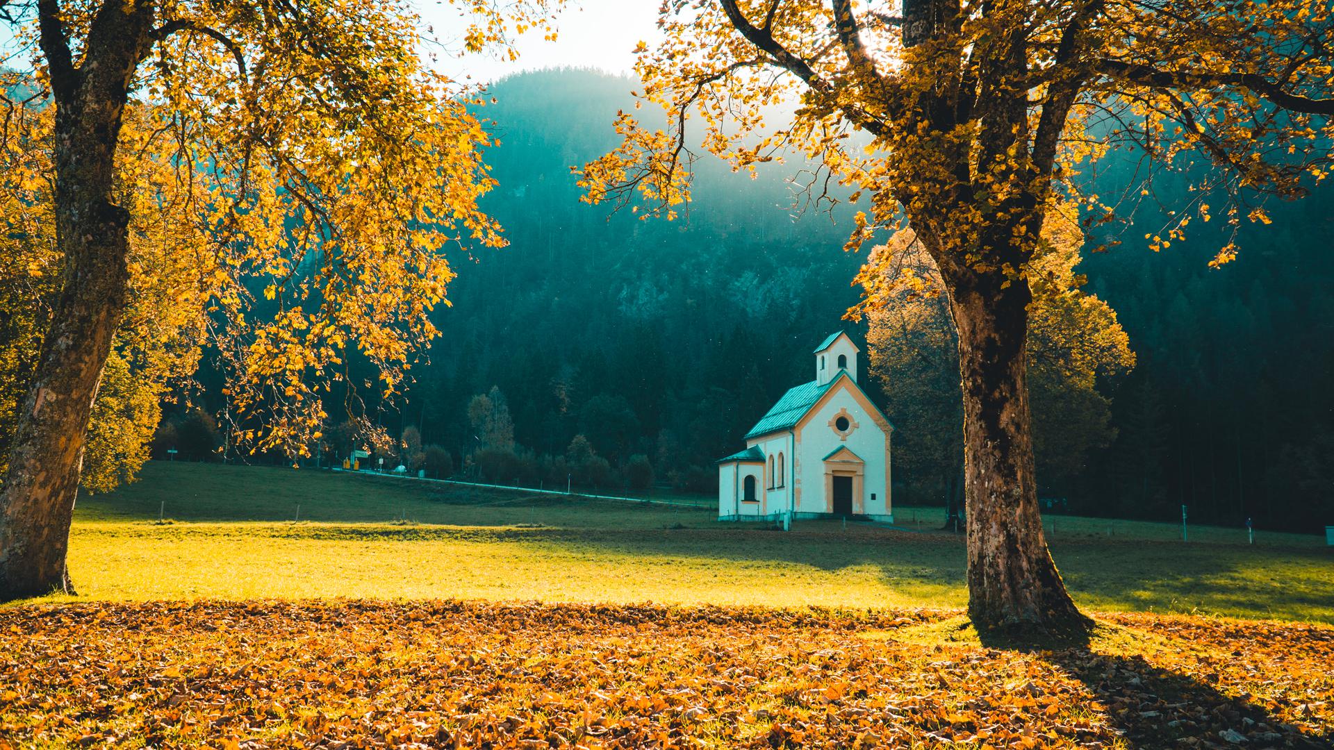Mùa thu lá vàng cực kỳ đẹp mắt