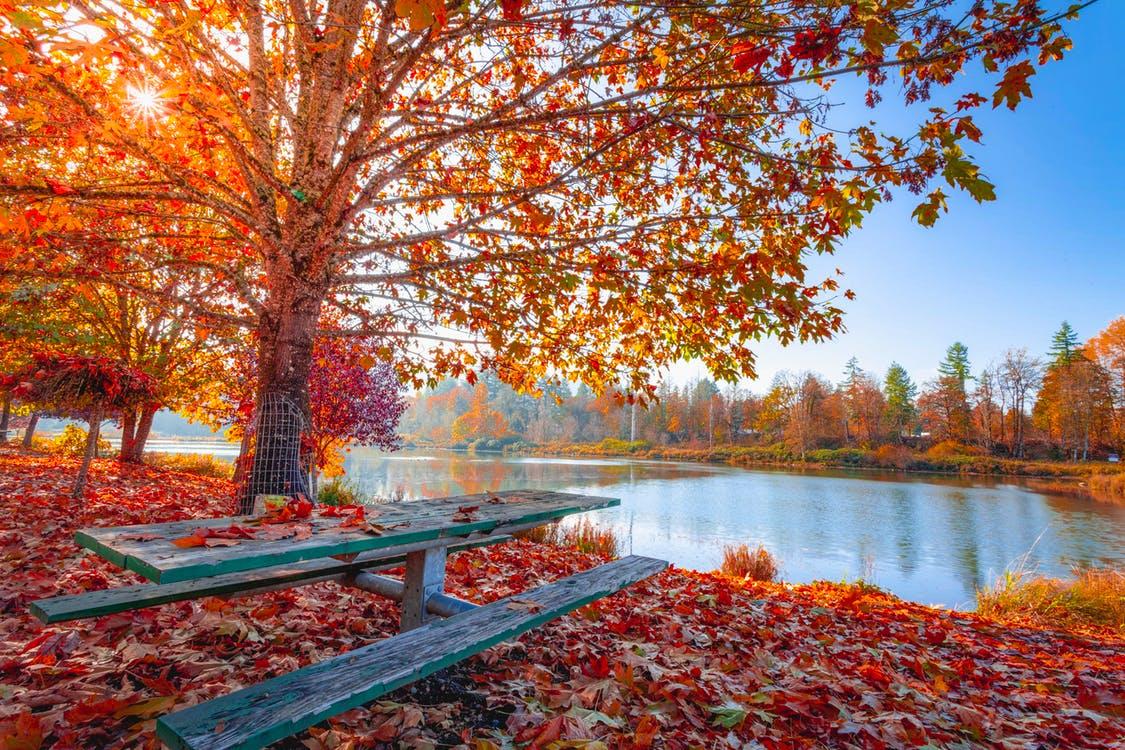 Mùa thu lá vàng rơi bên hồ rất thơ mộng